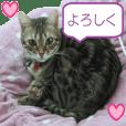 ベンガル猫のナッチャン