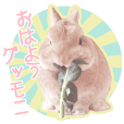 Inari the Rabbit Sticker 3