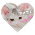 Pretty kitten's name is Ikura