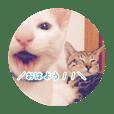 ゆるい3猫スタンプ