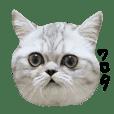 猫のミチコちゃんスタンプ