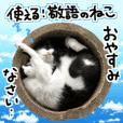 Honorific cat -Too use-