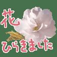 さくらさく~春の桜実写版~たっぷり40種類