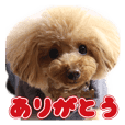 sora toy poodle Sticker 2