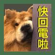 Yu Family Zoo
