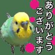 インコのポンちゃん(敬語)