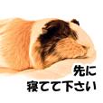 NANA-chan, my dear guinea pig