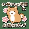 Japanese dog maro Shiba Inu