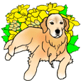 MAME the Golden Retriever