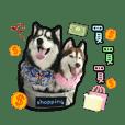 Lai Pai home-Husky Macaron&Chocolate P2