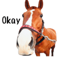 100% equine for horse lovers!!
