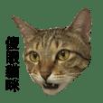 Fat cat - yota