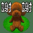 玩具貴賓犬 vo1