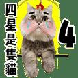 四星貓愛嗆人重出江湖