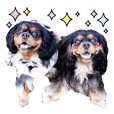 Cavalier Black and Tan FRIENDS !