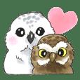 Polite owls