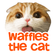 Waffles the Cat