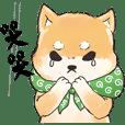 Boss Shiba inu