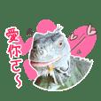 侏羅紀-諾·翔·寶