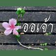 Thai Thai text