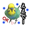 "Budgerigar's Ponchan ""Kansai dialect""."