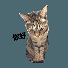 mina meow