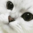 JORO CAT