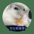 I love Hamster Baby