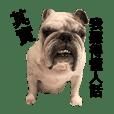 Bulldog - Teijan & Madi (1)