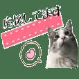 癒し猫**実写**敬語Ver4