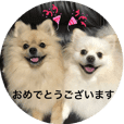 Pomeranian Leo and max11honorificsticker