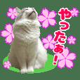 しずく&北斗★3[春]