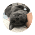 Taddy cat