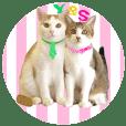 buddy-buddy cat Yo and Su