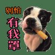 Boston Terrier A-Fu vol.2