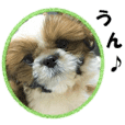 Shih tzu photo sticker 3