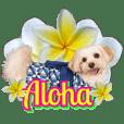 HAPPY ALOHA