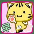 可愛條紋小貓貓!!!CAT148