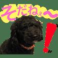 ☆デカ文字☆ トイプードル シンプル ver