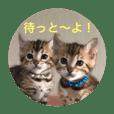bengalcats (HAKATA)