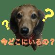 ミニチュアダックス芽生ちゃんの日常会話
