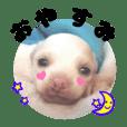 ヴィーガンの保護犬 日本語版 NGO LIA公認