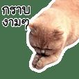 OH MY CAT! 8