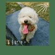 A Pudelhund