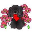 COO-chan 4 : Black Toy Poodle