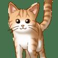 猫図鑑 茶白猫