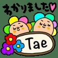 Tae専用セットパック