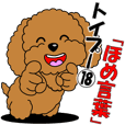 "Toy poodle 18 ""Praise Words"""