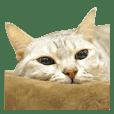Afatfat cat & Bonjour