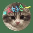 pretty  CAT's  greeting  card